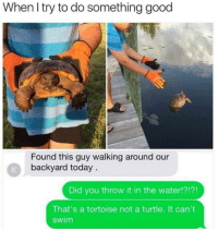 me irl: When l try to do something good  Found this guy walking around our  backyard today  Did you throw it in the water!?!?!  That's a tortoise not a turtle. It can't  swim me irl