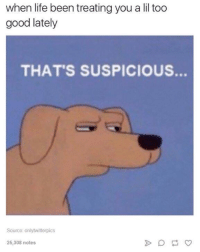 Lid and Who Up: when life been treating you a lid too  good lately  THAT'S SUSPICIOUS.  Source onlylwitterpics  25,308 notes yo who up post some memes in the comments