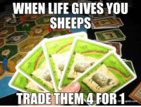 """Life, Tumblr, and Blog: WHEN LIFE GIVES YOU  SHEEPS  TRADETHEM 4 FOR-1 <p><a href=""""http://awesomacious.tumblr.com/post/170227189715/any-catan-players"""" class=""""tumblr_blog"""">awesomacious</a>:</p>  <blockquote><p>Any Catan players?</p></blockquote>"""