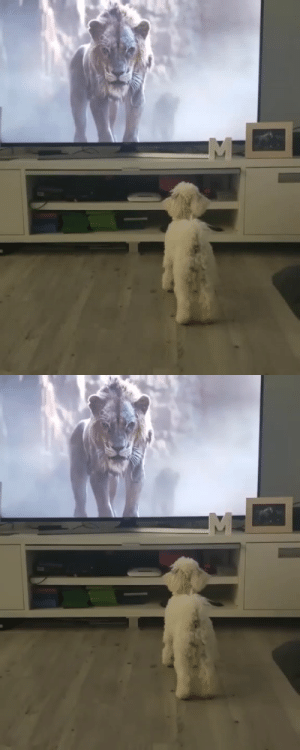 When Lion King gets too real for the doggo (via): When Lion King gets too real for the doggo (via)