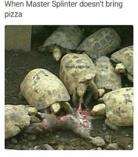 Dank, Funny, and Lmao: When Master Splinter doesn't bring  pizza  otypicalterome ~ Follow my new account @knittedcondom • • • • • textpost meme singingovaries relatable trump dank vine tumblr fuckjerry textposts laugh mirandasings me funny wtf lmao hoebomb tweet lol sexualising wififun tweets spermsoup comedy quornhub funnytumblr pepethefrog relate twitter