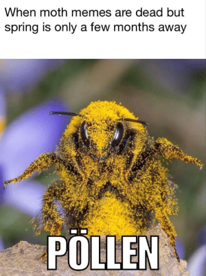 Dank, Memes, and Money: When moth memes are dead but  spring is only a few months away  POLLEN Making honey money by Xaalster MORE MEMES
