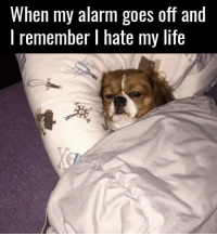 Dank, Life, and Alarm: When my alarm goes off and  I remember I hate my life 😐
