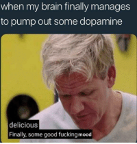 Fucking, Memes, and Mood: when my brain finally manages  to pump out some dopamine  delicious  Finally, some good fucking mood <p>My brain likes to play mind games on me</p><p><b><i>You need your required daily intake of memes! Follow <a>@nochillmemes</a>​ for help now!</i></b><br/></p>