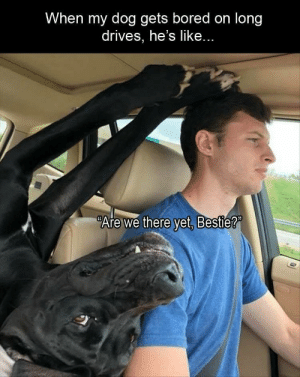 Bored, Funny, and Memes: When my dog gets bored on long  drives, he's like...  Arewe there yet. Bestie? Funny Memes Of The Day 29 Pics