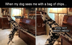 """Funny Memes Of The Day 33 Pics: When my dog sees me with a bag of chips.  YOU.""""  YOU GOT  WHATINEED Funny Memes Of The Day 33 Pics"""