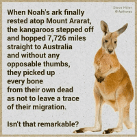 Memes, 🤖, and Ark: When Noah's ark finally  rested atop Mount Ararat,  the kangaroos stepped off  and hopped 7,726 miles  straight to Australia  and without any  opposable thumbs  they picked up  every bone  from their own dead  as not to leave a trace  of their migration.  Isn't that remarkable?  Steve Miller  Apikores