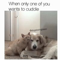 Tits, Sugar, and Girl Memes: When only one of you  wants to cuddle  @dogsbeingbasic DAS ME 😭 I'm the most independent neediest sugar tits I know. please just hold meeeee 😭🤧