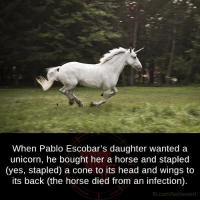 Unicorn: When Pablo Escobar's daughter wanted a  unicorn, he bought her a horse and stapled  (yes, stapled) a cone to its head and wings to  its back (the horse died from an infection).  fb.com/factsweird
