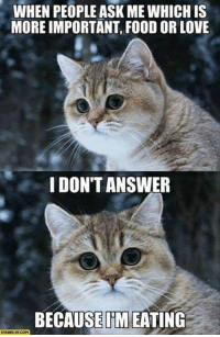 Cat Memes: WHEN PEOPLE ASK MEWHICH IS  MOREIMPORTANT FOOD OR LOVE  I DONT ANSWER  BECAUSE IM EATING  STARE CAT COM