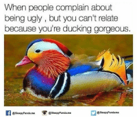 Memes, Ugly, and Panda: When people complain about  being ugly, but you can't relate  because you're ducking gorgeous.  @sleepy Panda.me  asleepyPandame  @sleepy Panda me