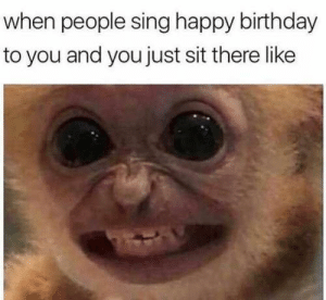 Birthday, Fresh, and Memes: when people sing happy birthday  to you and you just sit there like 17 Fresh Animal Memes That Will Fill You With Joy In The Next Few Minutes - I Can Has Cheezburger?