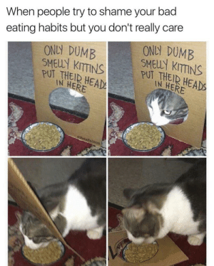 Memes: When people try to shame your bad  eating habits but you don't really care  ONLY DUMB  ONLY DUMB  SMELLY KITTINS  PUT THEIR HEAD  IN HERE  SMELLY KITTINS  PUT THEIR HEADS  IN HERE  BetaBalmon Memes