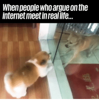 Arguing, Dank, and Internet: When people who argue on the  internet meet in real life... Oh dear... 😂😂😂  Newsflare