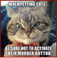 For more cute pics LIKE us at The Purrfect Feline Page: WHEN PETTING  CATS..  BE SURE NOT TO ACTIVATE  THEIR MURDER BUTTON For more cute pics LIKE us at The Purrfect Feline Page