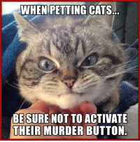 Find 'Loki the little Vampire Cat' on Instagram and Facebook.: WHEN PETTING  CATS  BE SURE NOT TO ACTIVATE  THEIR MURDER BUTTON Find 'Loki the little Vampire Cat' on Instagram and Facebook.