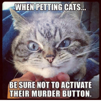 Petting Cat: WHEN PETTING CATS  BE SURE NOT TO ACTIVATE  THEIR MURDER BUTTON