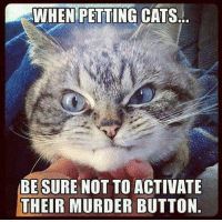 Petting Cat: WHEN PETTING CATS...  BE SURE NOT TO ACTIVATE  THEIR MURDER BUTTON