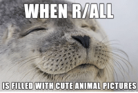 Rarely happens anymore, but...: WHEN R/ALL  IS FILLED WITH CUTE ANIMAL PICTURES  made on imgur Rarely happens anymore, but...