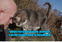 You can has more funny ➡️ http://bit.ly/Lolcats: when raised properly humans  can be taughthow to headbonk You can has more funny ➡️ http://bit.ly/Lolcats
