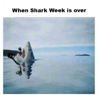 Shark, Been, and Fun: When Shark Week is over <p>I&rsquo;ve been basking in the fun all week, and now I don&rsquo;t know what to mako &lsquo;bout this. Just been dealing with the fishues, now.</p>