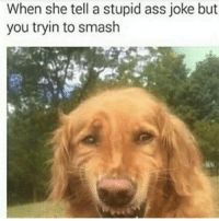 Ass, Funny, and Smashing: When she tell a stupid ass joke but  you tryin to smash 😂😂😂😁😁