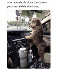Driving, Lol, and Memes: when somebody blows their horn at  your mama while she driving Lol 😂