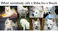 When somebody calls a Shiba Inu a Shoob 0742_15-09-19-2152_6EEE091719X5_THAT'S-THE-WRONG-DOGGY.jpg