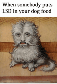 Food, Classical Art, and Lsd: When somebody puts  LSD in your dog food