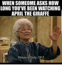 Anyone else waiting for that giraffe: WHEN SOMEOME ASKS HOW  LONG YOU'VE BEENWATCHING  APRIL THE GIRAFFE  Picture it Sicily, 1912. Anyone else waiting for that giraffe