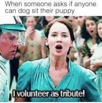 Memes, Puppy, and Asks: When someone asks if anyone  can dog sit their puppy  Ivolunteer as tribute! ME 😍😍😍😍