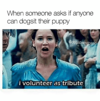 Memes, Puppies, and Puppy: When someone asks if anyone  can dogsit their puppy  @dogs beingbasic  i volunteer as tribute I volunteer as tribute for this every single time. @bustle