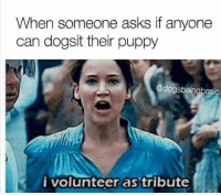Memes, Puppies, and Puppy: When someone asks if anyone  can dogsit their puppy  @dogsbeingbasic  i volunteer as tribute tag someone - ur friends