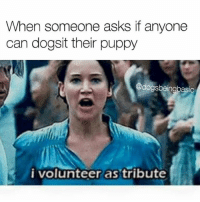 Memes, 🤖, and Volunteer as Tribute: When someone asks if anyone  can dogsit their puppy  @dogsbeingbasic  i volunteer as tribute 🙋🙋🙋 (@dogsbeingbasic)