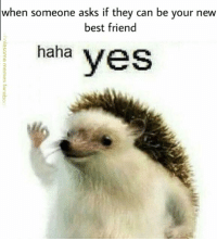 Best Friend, Best, and Asks: when someone asks if they can be your new  best friend  haha yes