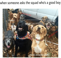 Yes, Men, and Find: when someone asks the squad who's a good boy  u callin'  all this excite is doing men  righten  me?!  ohjeez dunno  i Yes am 9  does an honorable* find wholesome memes on instagram now! @memeswholesome