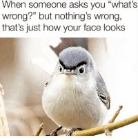 """Bitch, Queen, and Girl Memes: When someone asks you """"what's  wrong?"""" but nothing's wrong,  that's just how your face looks Queen of resting bitch face 👸🏽"""