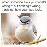 "Funny, Lol, and Asks: When someone asks you ""what's  wrong?"" but nothing's wrong,  that's just how your face looks  15 Tag this face lol"