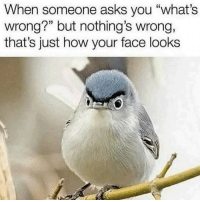 """Asks, How, and Face: When someone asks you """"what's  wrong?"""" but nothing's wrong,  that's just how your face looks"""
