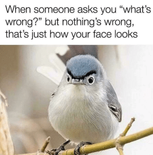 "meirl: When someone asks you ""what's  wrong?"" but nothing's wrong,  that's just how your face looks meirl"