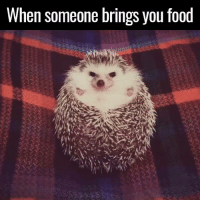 This hedgehog's face when he sees food will make your day 😂😂🍏: When someone brings you food This hedgehog's face when he sees food will make your day 😂😂🍏