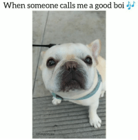 9gag, Animals, and Dogs: When someone calls me a good boiJ  @funpawcare (Volume up) 🐽 💓😭😂 Who else snorts when they laugh??@funpawcare venice venicebeach la cali california losangeles socal santamonica Malibu beverlyhills pacificpalisades brentwood manhattanbeach marinadelmar culvercity southbay westside westla westwood sawtelle marvista marinadelrey dog dogs dogstagram frenchbulldog frenchie frenchiestagram frenchiesofinstagram instagram @theellenshow @9gag @buzzfeed @buzzfeedanimals @cbsla @lnsta_dogs @dogsofinstagram @instagram @dogsbeingbasic @dogs @failsclip @funnyfailvideos @fun_bestvids @lol_vines @bestvidsnow @failsvids @animals.co @thedodo @boopmynose @dogsofinstaworld @pups @pawz @puppystagrams @animal_unity @dogs.lovers @animalove.co @cutepetclub @puppyscene @campingwithdogs @bestvinesnow