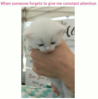 9gag, Animals, and Cats: When someone forgets to give me constant attention  @funpawcare Listen to this lil squeaker (Volume up) 😻🔥😂 @funpawcare Thought you'd like these little ones @pussalina @abbotkittylounge instagram instadaily instagood igdaily picoftheday pictureoftheday petstagram adorable funnycat catsrule cat cats meow kitten kitty Catsofinstagram gato gatos coolcat fatcat fatcats fatcatsofinstagram catpic catpics catpictures la losangeles california AbbotKinney venice @9gag @buzzfeed @buzzfeedanimals @cbsla @cats_of_instagram @instagram @failsclip @funnyfailvideos @fun_bestvids @lol_vines @bestvidsnow @failsvids @animals.co @thedodo @boopmynose @pawz @animal_unity @animalove.co @cutepetclub @bestvinesnow