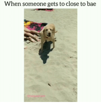 Bae, Meme, and Memes: When someone gets to close to bae  @funpawcare Nobody move, nobody get hurt. (Volume up) @funpawcare (not fixing meme, *too) 😂 venice venicebeach la cali california losangeles socal santamonica Malibu beverlyhills pacificpalisades brentwood manhattanbeach marinadelmar culvercity southbay westside westla westwood marvista barking barker bark woof woofer bestboy goodboy dogpictures dogpic dogpics