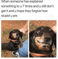 Dank, Memes, and Animal: When  someone  has  explained  something to u 7 times and u still don't  get it and u hope they forgive how  stupid u are Animal Memes