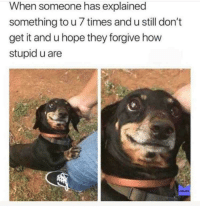 Memes, Forgiveness, and Hope: When someone has explained  something to u 7 times and u still don't  get it and u hope they forgive how  stupid u are  MEMES Hope for forgiveness