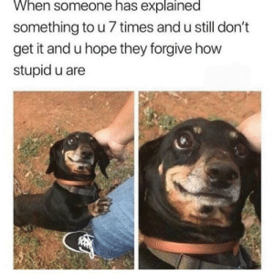 Dank, Memes, and Target: When someone has explained  something to u 7 times and u still don't  get it and u hope they forgive how  stupid u are There's still hope for mepls have patience. by skyvmoon MORE MEMES