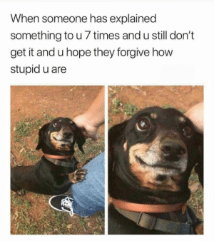 Dogs, Funny, and Memebase: When someone has explained  something to u 7 times and u still don't  get it and u hope they forgive how  stupid u are 43 Funny Animal Memes That'll Cure All Of Your Angst - Memebase - Funny Memes #Dogs