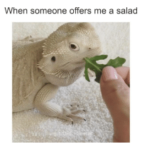 Dank, Accurate Representation, and 🤖: When someone offers me a salad  ong?  cial An accurate representation