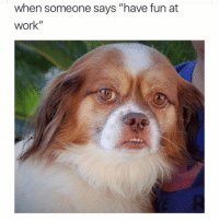 """Dogs, Work, and Annoying: when someone says """"have fun at  work"""" Stop saying that. #Dogs #Work #Annoying"""